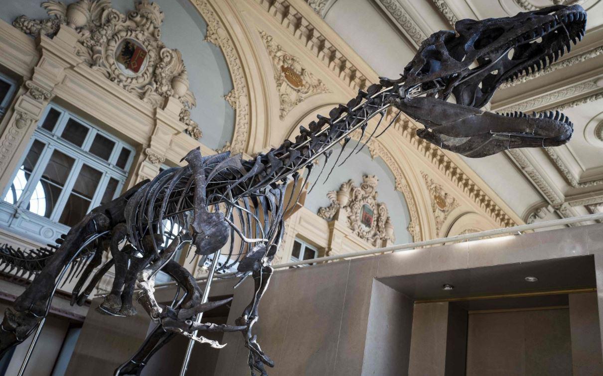 Subastan el esqueleto de un dinosaurio de 2,7 metros de alto