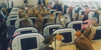 Halcones en el avión