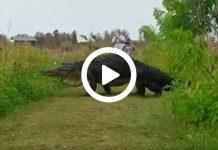 Cocodrilo gigante