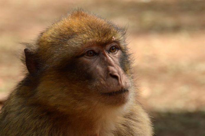 No se llaman monos