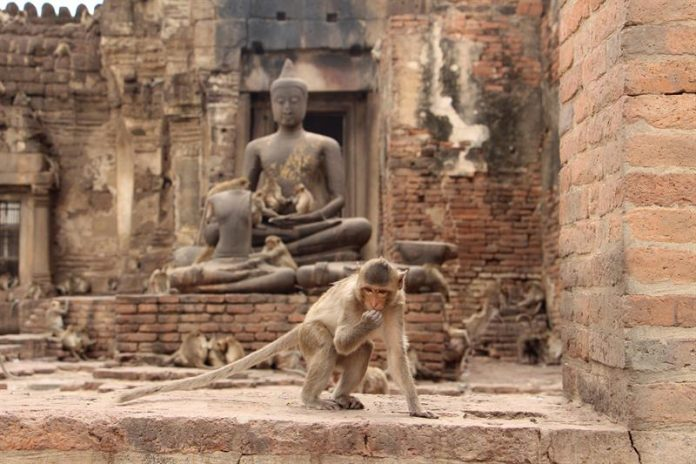 tailandesa